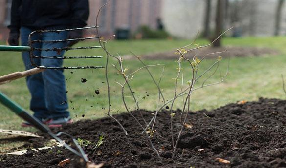 Innovation Food Forest offers students and faculty sustainable gardening options on campus (Photo courtesy of the Office of Sustainability).